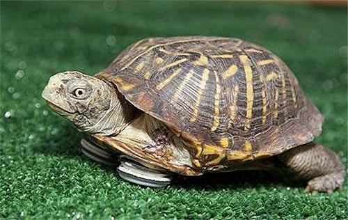【图】乌龟喜欢吃什么 乌龟怎么养长得快