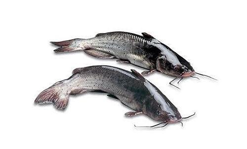 【图】长江回鱼的营养价值有哪些 长江回鱼的作用