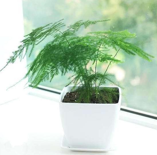 这种植物能够去甲醛 就想问一句,你种草了吗?