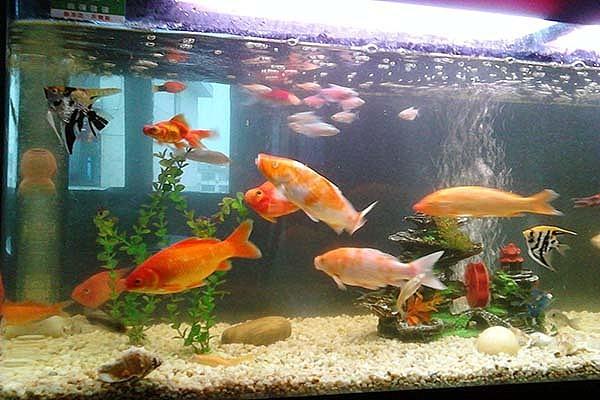 客厅鱼缸摆放风水禁忌 为什么不能开门见鱼缸