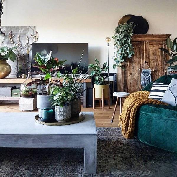 绿植的作用 几块钱却让你家焕然一新!