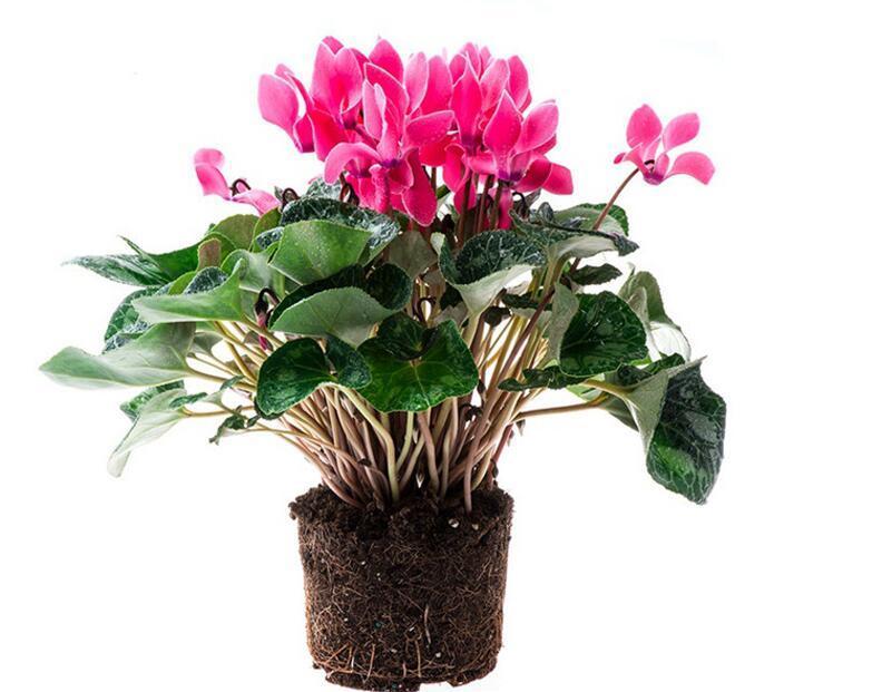 办公室招财植物有哪些
