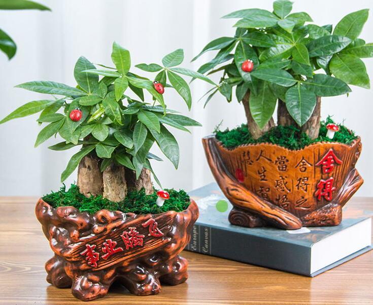 办公室招财植物
