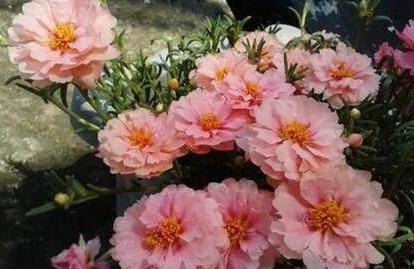 家里不知道养什么花好 这6种漂亮又好养的盆栽考虑一下