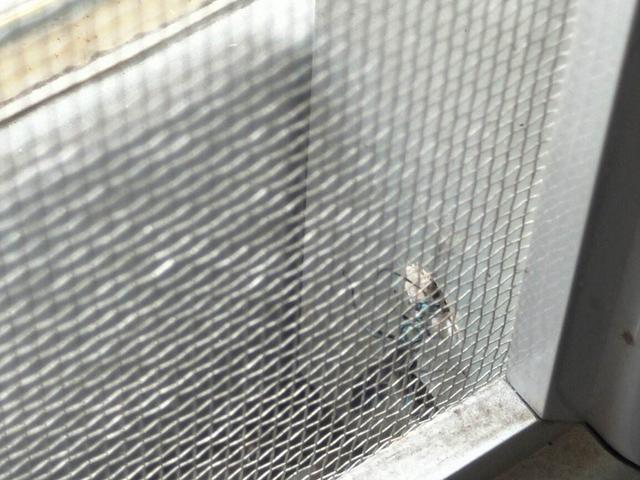高楼层可以不装纱窗吗