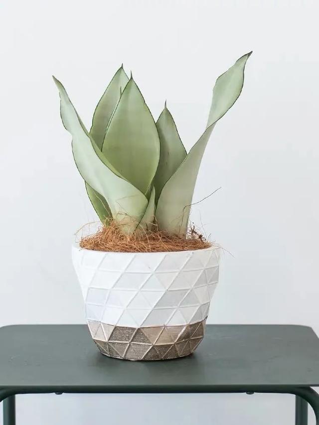 夏季空调房如何养花 做好这几点花儿才能养得旺