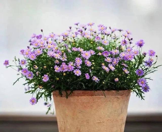 5月份室内养什么花 这四种养好了一整夏都有花赏