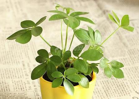 闲着没事摆几盆植物增增财运