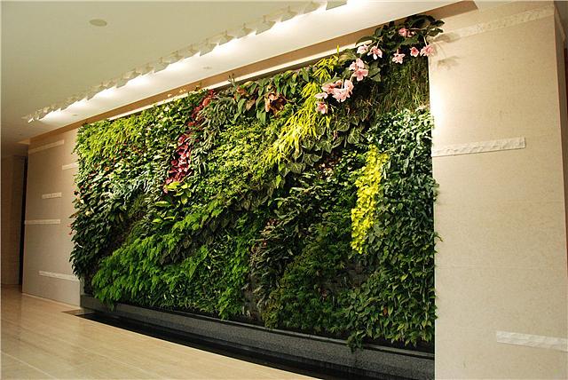 室内植物墙做法以及注意事项 室内植物墙价格多少一米
