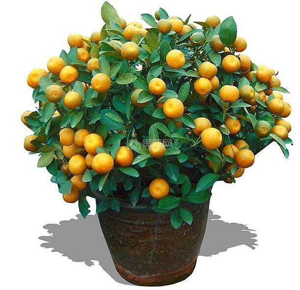 风水:家里摆什么植物招财 这些植物最招财
