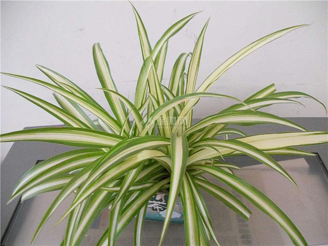 客厅一进门摆放什么好 客厅进门可以摆放植物吗