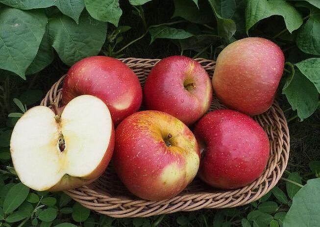 【图】野苹果的营养价值