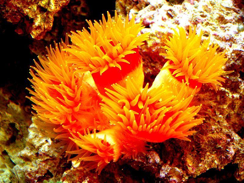 【图】金珊瑚价格是多少 金珊瑚鉴定方法