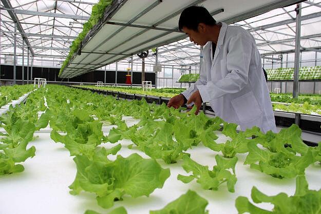 【图】无土栽培植物的优点?无土栽培的基质配方