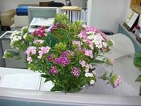 为何办公室鲜花莫乱摆?鲜花摆放原则
