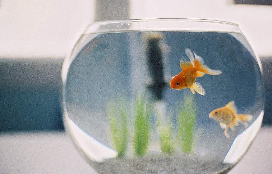 如何利用鱼缸来旺财