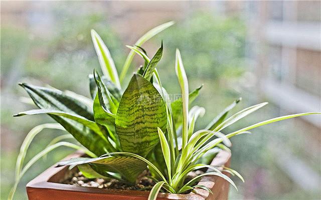 推荐!7种提升小孩学习专注力的植物