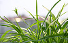 家庭除甲醛小常识 使用椰维炭除甲醛效率更高