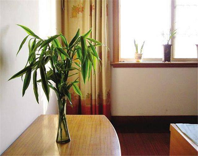 卧室放什么植物风水好 卧室不宜放什么植物