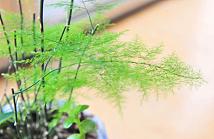 书房放什么植物好 这6种适宜