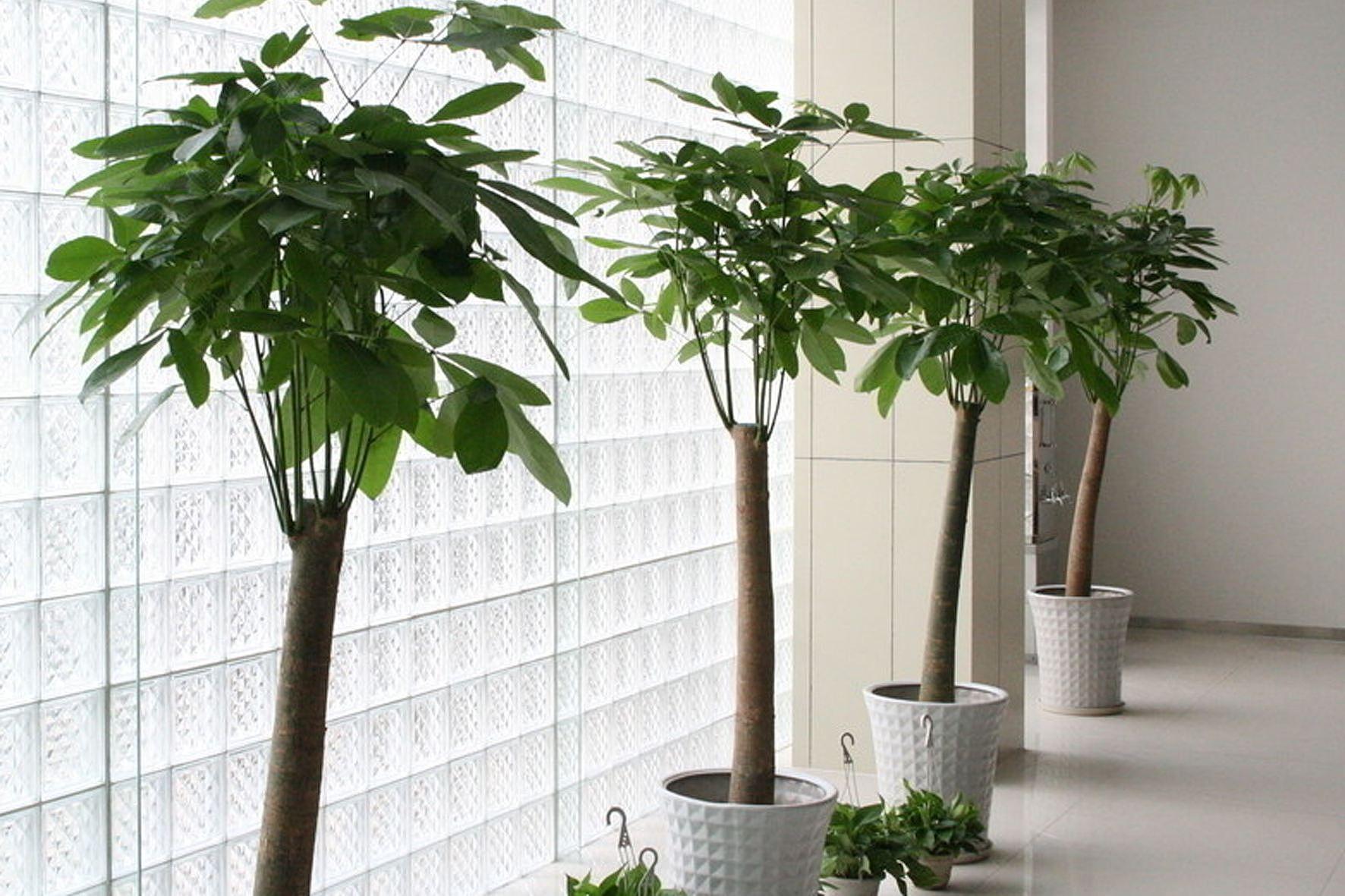 店铺放什么植物最招财