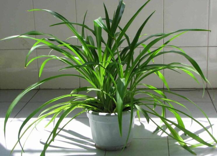 卫生间摆放什么植物增加财运