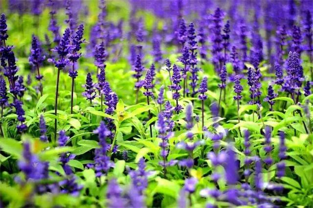 十二生肖对应的花 看看你是属于哪种的吧!