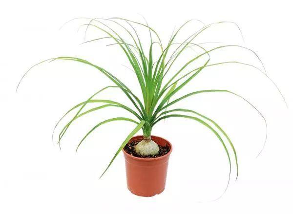 室内观叶植物选择 这几种超有绿意感的!