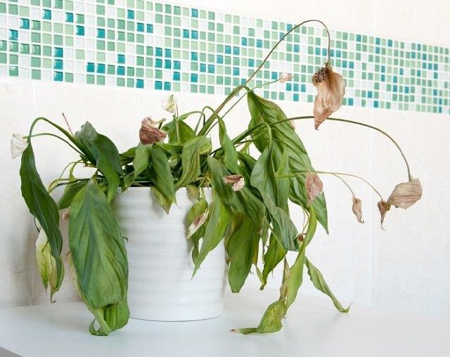 """室内植物怎么养才好 告诉你9个""""不死秘诀"""""""