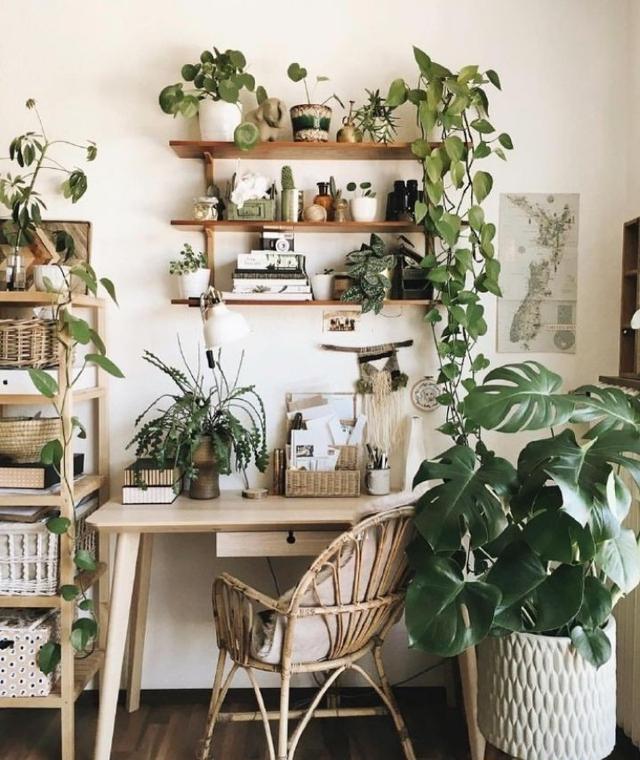家居植物角设计 提前了解必备要素很重要