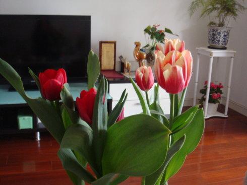 2019年风靡ins的4种装饰鲜花 我都给你找来了