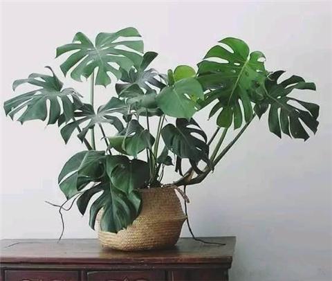 家中养植物的妙处 回家后便可享受放松的生活