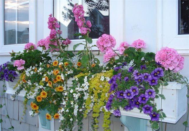15款好看的花箱 充满着园艺的气息