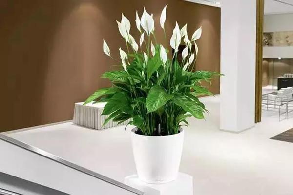 风水中最招财的植物有哪些 八种植物招财又旺宅