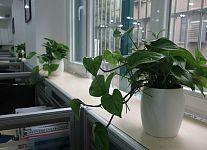 辦公室花卉擺放風水知識 辦公室風水植物知多少?