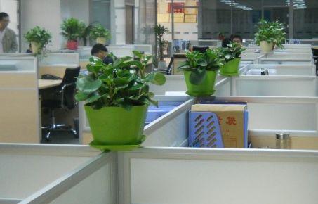 办公室花卉风水