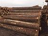 俄官员希望中俄联手打击俄境内木材非法采伐问题