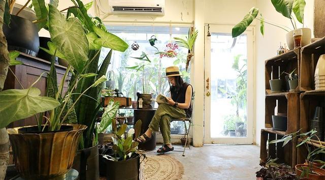 7种生命力强的植物 超好养躺著就能美化居家!