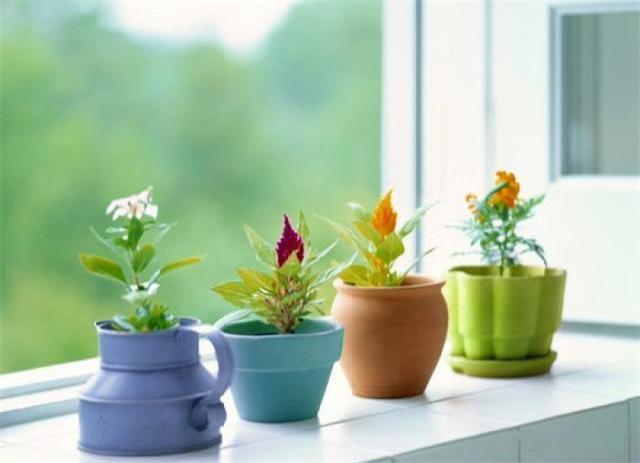 高颜值室内植物推荐 选择这些聚财纳福