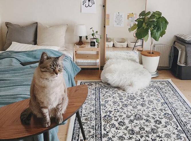 3套简约又精致的卧室 没有华丽的装饰