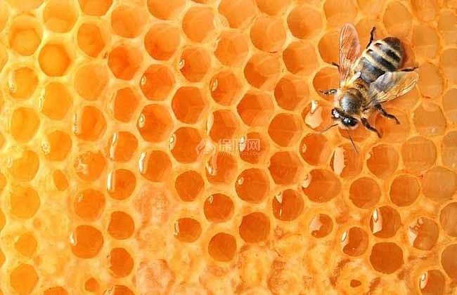 【图】蜂蜜水减肥法是真的蜂蜜水减肥法的伊美瘦身上海闵行区图片