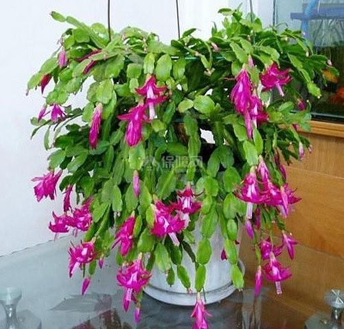 净化空气的植物
