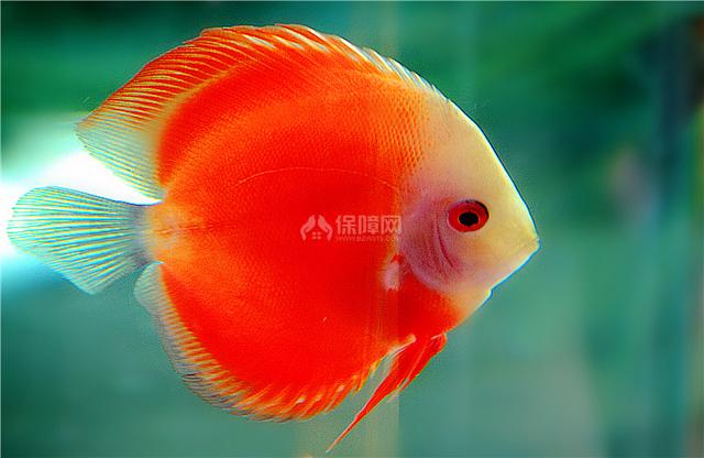 观赏鱼怎么养